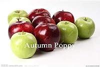 昇進! 30個ドワーフアップル盆栽、屋内ミニチュアアップルツリー、甘い果物野菜、アウトドア、DIYの家の庭の植物:F