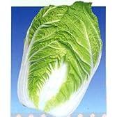 クリーム2号[白菜]【タネ】20ml