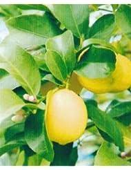 アロマオイル レモンリーフ れもんの葉 5ml エッセンシャルオイル 100%天然成分