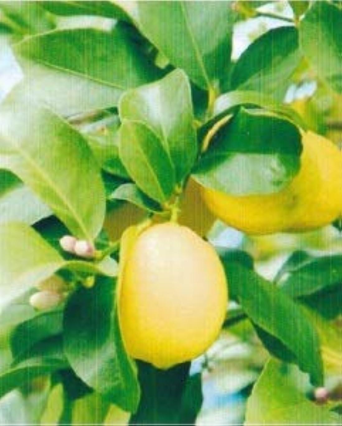文言煙突複合アロマオイル レモンリーフ れもんの葉 5ml エッセンシャルオイル 100%天然成分