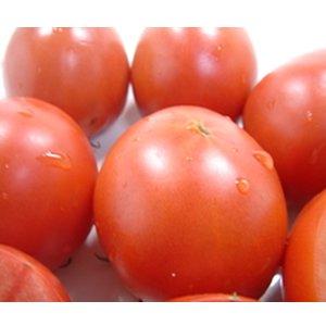 高知県産 徳谷トマト 約1kg