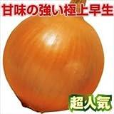 国華園 野菜たね タマネギ 甘早果 1袋(5ml入)【※発送が国華園からの場合のみ正規品です】