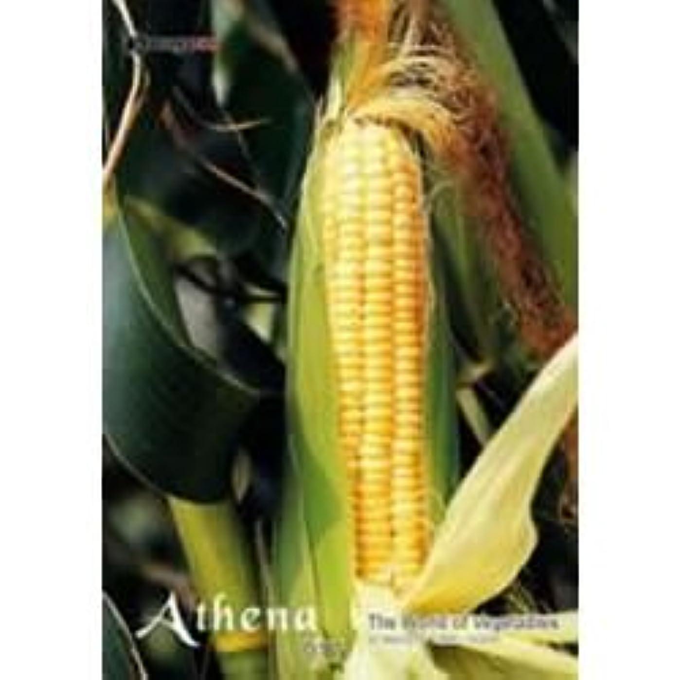 パン屋法律により刺すアテナ Vol.17 野菜の風景