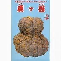 かぼちゃ 種 【 鹿ヶ谷南瓜 】 種子 小袋(約5ml)