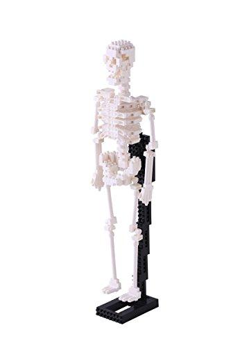 ナノブロック 人体骨格 NBM-014