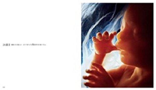 あすなろ書房『AChildisBorn赤ちゃんの誕生』