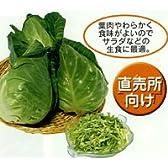 みさき[キャベツ]【タネ】小袋