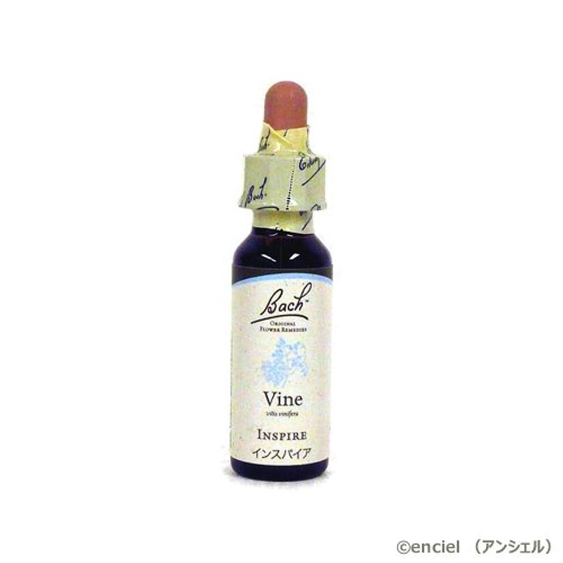 愛情深い美容師改革バッチフラワー レメディ バイン(VINE) 10ml グリセリンタイプ 日本国内正規品