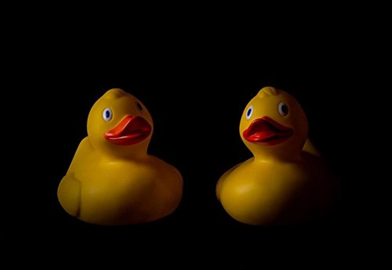 ラミネート加工34 x 24ポスター: Toys Duck Ducks Rubber Duck Rubber Ducks Bath Toyイエロー