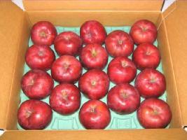 北海道のリンゴ 旭(あさひ) 5kg(18玉) 【期間限定】10月中旬
