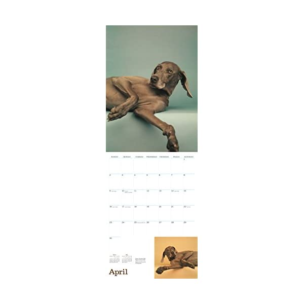 William Wegman Mans Bes...の紹介画像4