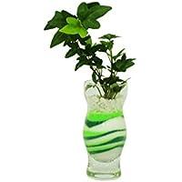 花市場直送便 アイビー(カラーサンド植え) プチベースE グリーン