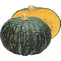 【カボチャ種子】恋するマロン 南瓜 50粒 (カネコ種苗)