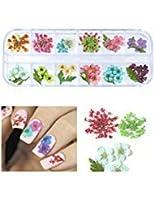 アリードリュー712153d Flower Decalsネイルマニキュアwithプラスチックケース(12セット) アート、Real乾燥花ネイルアート