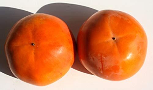 JA香川県 香川県産富有柿 2L 7.5kg