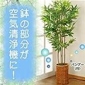 空気清浄機付光触媒加工グリーン バンブー
