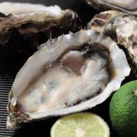 SHUEI 生食用・殻付き牡蠣(ハーフシェルオイスター)12個セット