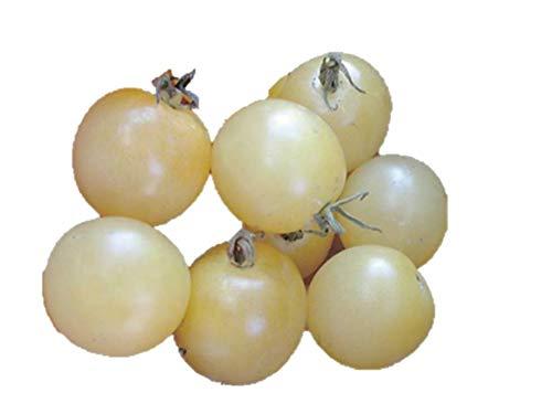 超甘い アイススノー ミニトマト 種 36粒