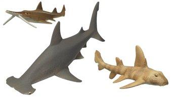 不思議生物大百科 サメ 大海の補食者 3種(ヒラシュモク、ノコギリザメ、ネコザメ)