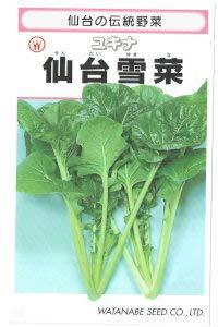 渡辺採種場 仙台雪菜