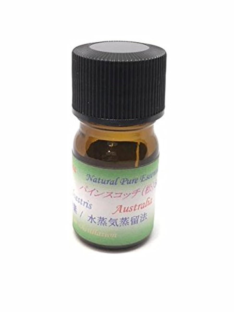パインスコッチ 100% ピュアエッセンシャルオイル アロマ精油(松ぼっくりの精油) (30ml)