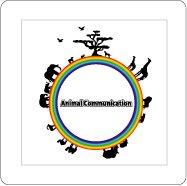 アニマルコミュニケーション DVD(テキストセット)