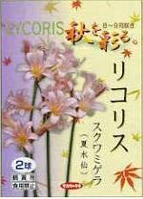 リコリス スクワミゲラ【夏水仙】 6球セット
