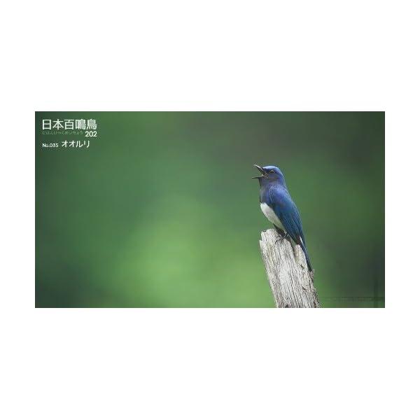 シンフォレストBlu-ray 日本百鳴鳥 20...の紹介画像7