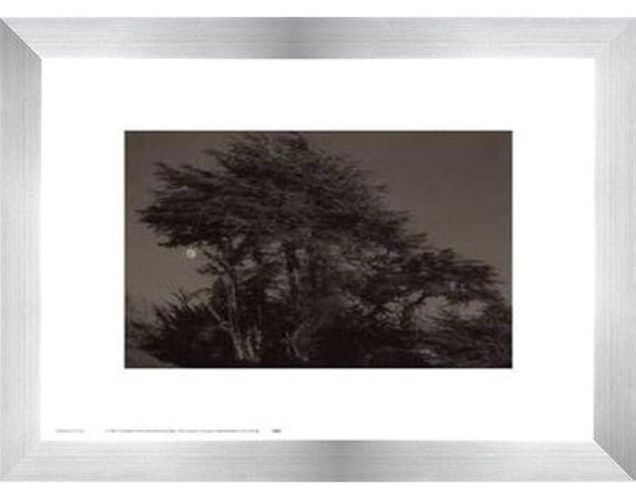 取るに足らないアクセスできないゆりHarvest Moon by Paul Kozal – 14 x 11インチ – アートプリントポスター LE_61797-F9935-14x11