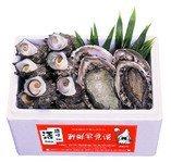 隠岐の活あわび さざえセット あわび黒 0.5kg さざえ 2kg 日本海隠岐活魚倶楽部 コリコリ食感と磯の風味が漂う一流アワビとサザエのセット レシピ付