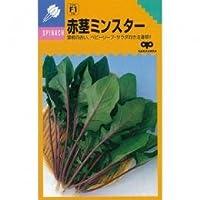 ホウレンソウ 種 赤茎ミンスター 小袋(約25ml)