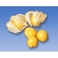 葉菜類 種 食用ほおずき キャンディランタン コート約14粒