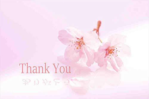 【言葉で伝えるポストカードAIR】「Thank You 【影は】ありがとう」美しい春の花桜のはがき 絵葉書