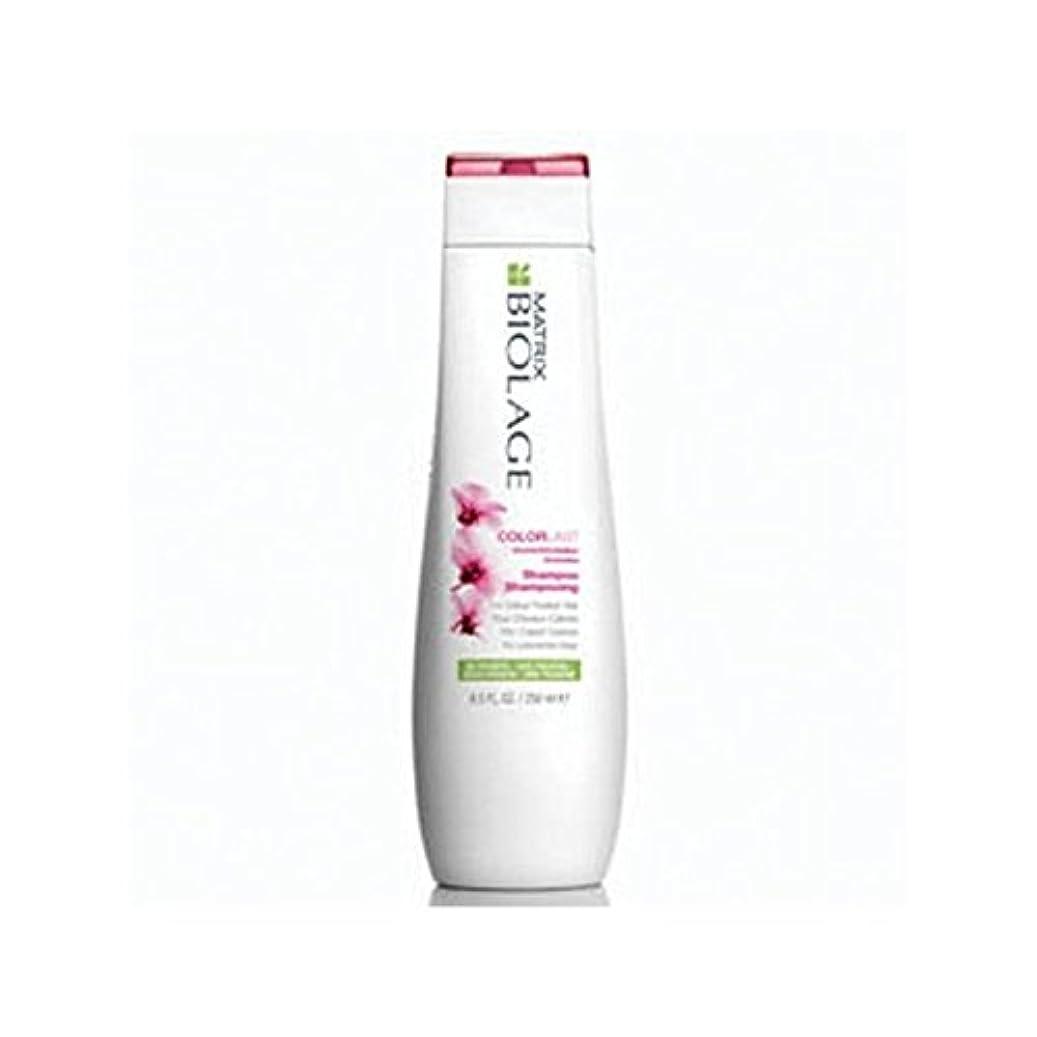 ただやる天皇回転させるMatrix Biolage Colorlast Shampoo (250ml) (Pack of 6) - マトリックスバイオレイジのシャンプー(250ミリリットル) x6 [並行輸入品]