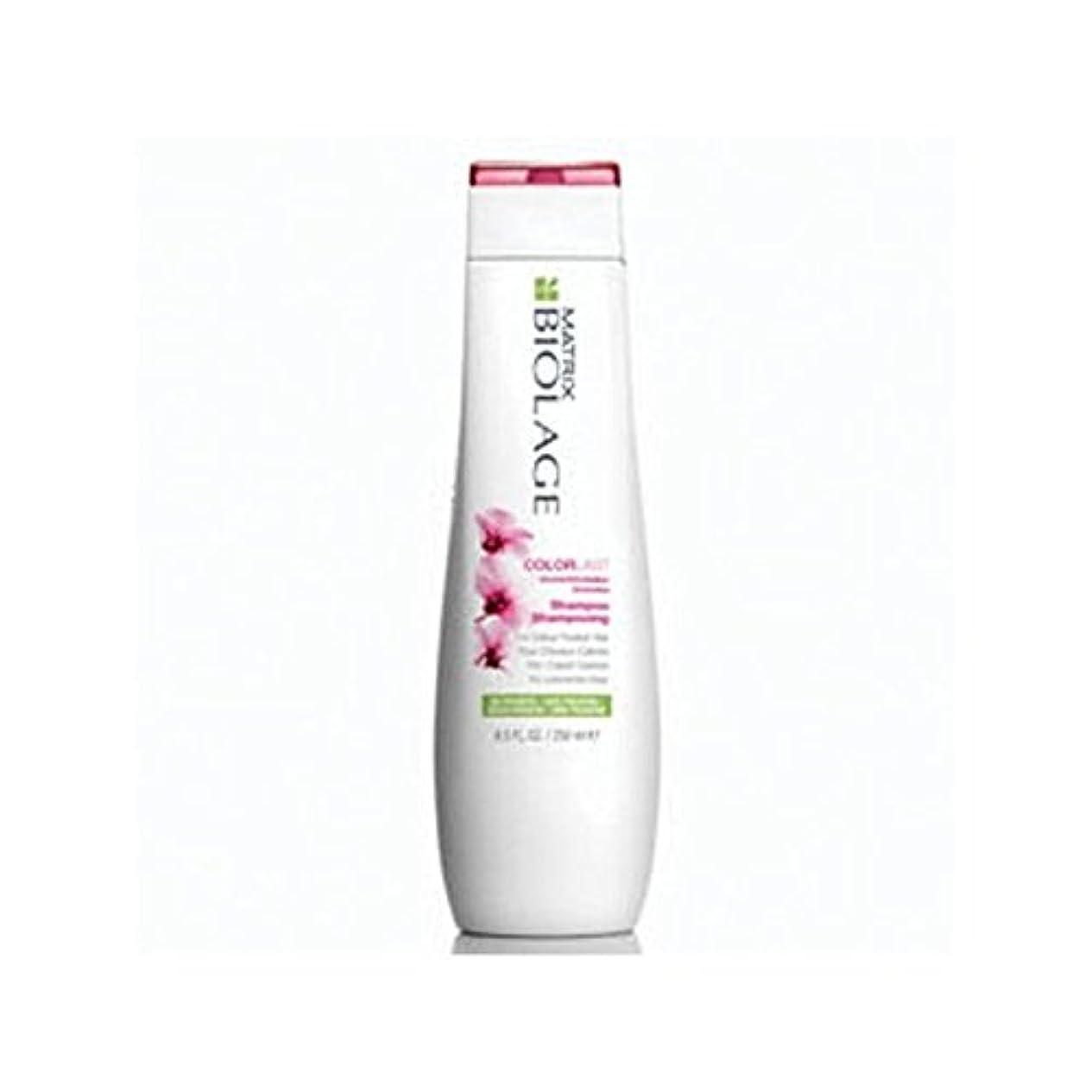 ゲージ魅力的であることへのアピールクリームMatrix Biolage Colorlast Shampoo (250ml) (Pack of 6) - マトリックスバイオレイジのシャンプー(250ミリリットル) x6 [並行輸入品]