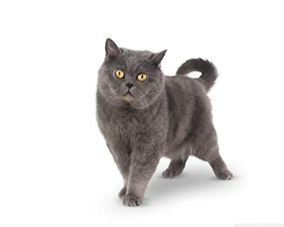 口径荒涼とした定説DIY油絵ペイントによる番号キット猫キャンバスプリントウォールアートホームオフィス装飾ギフト用大人子供初心者学生40x50cmでブラシフレーム