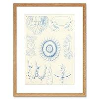 Nature Medusae Ernst Haeckel Science E Framed Wall Art Print 自然科学壁