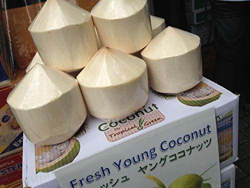 新鮮 タイ産 ヤングココナッツ 6個 3度楽しめるココナッツ [並行輸入品]