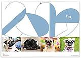 365カレンダー 2020年 パグ カレンダー 壁掛け 卓上付き 2020-019