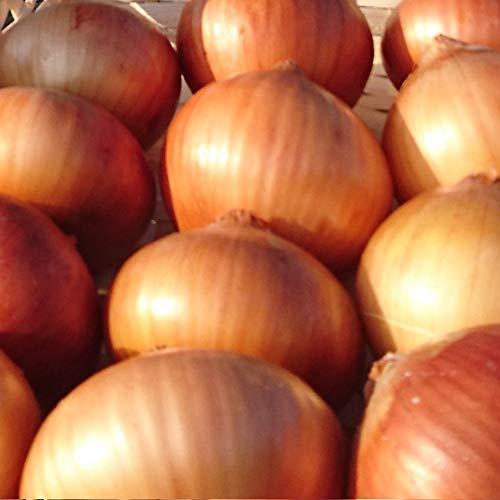 減農薬・特別栽培 兵庫県たじま産 タマネギ たまねぎ 玉葱 (5kg)