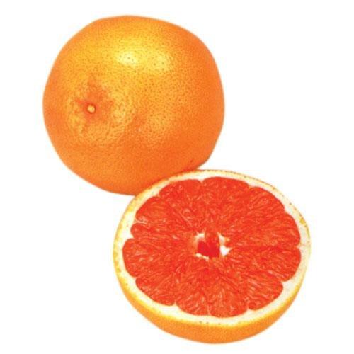 柑橘苗 グレープフルーツ ルビー 1年生
