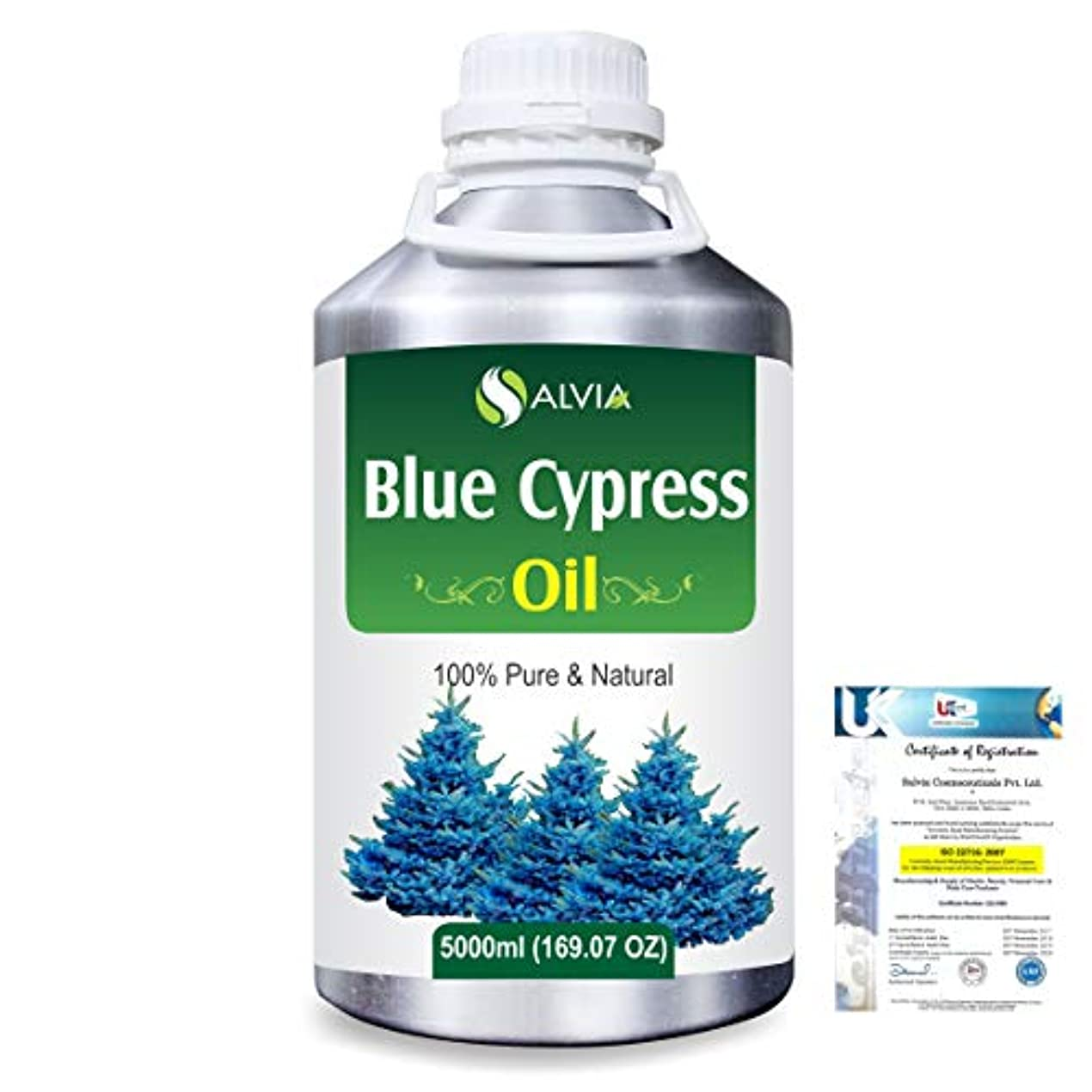 どんなときもフィットプロットBlue Cypress (Callitris Columellaris) 100% Natural Pure Essential Oil 5000ml/169fl.oz.