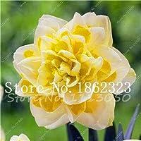 種子パッケージ:100個水仙盆栽、ラッパズイセン、盆栽種子ダブルALS AbsorptionSeed DIYホームガーデンシード:10