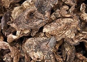 Sarcodon Aspratusキノコは、730 gの乾燥します