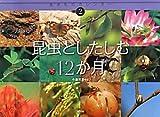 昆虫としたしむ12か月 (生きものカレンダー)