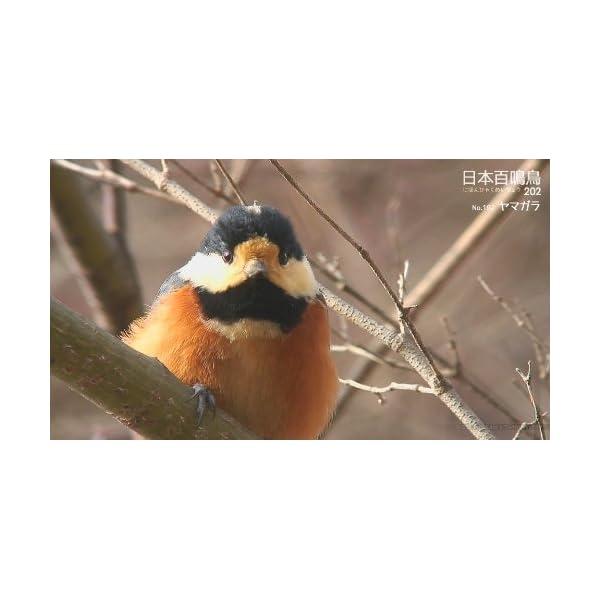 シンフォレストBlu-ray 日本百鳴鳥 2...の紹介画像29