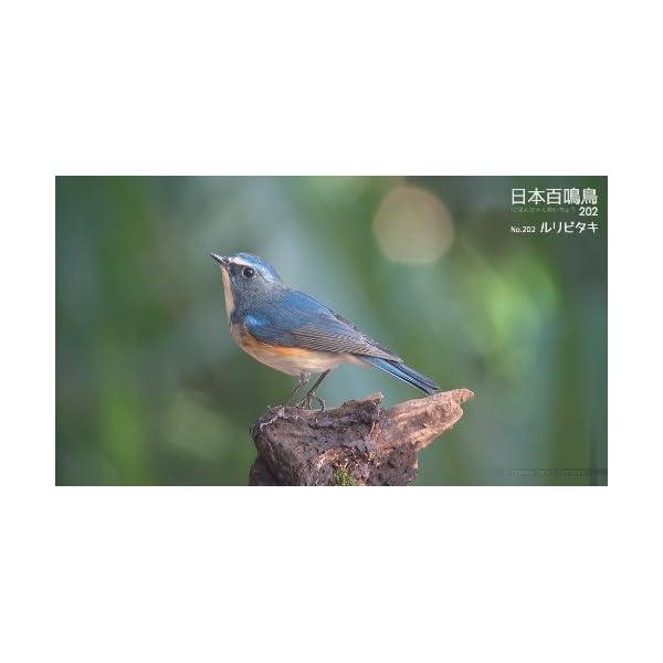 シンフォレストBlu-ray 日本百鳴鳥 2...の紹介画像32