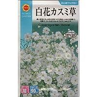 白花かすみ草 (春、秋まき) (832)