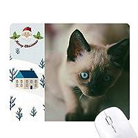 動物の青い目のグレーの子猫の写真 サンタクロース家屋ゴムのマウスパッド