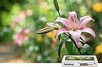 PigBangbang、プレミアムバスウッド ラージサイズ ピンク リリー 花 緑の葉 ブーケ - 1500ピース ジグソーパズル (34.4 X 22.6インチ)